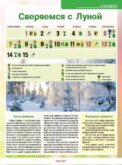 «Брюссель» на подоконнике 24 / 2018 Сад, огород- кормилец и лекарь