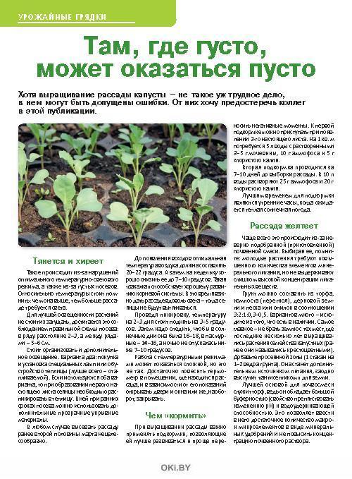 Бесплодна слива в одиночестве 3 / 2019 Сад, огород- кормилец и лекарь