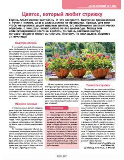 Растим свеклу для летного борща 5 / 2019 Сад, огород- кормилец и лекарь