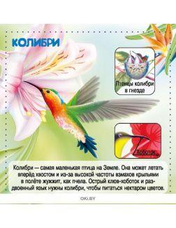 Птицы. Энциклопедия в кармане №2 (19)