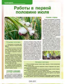 Чем дайкон лучше редьки 12 / 2019 Сад, огород- кормилец и лекарь