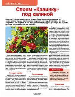 Подсолнухи в медицинских шапочках 13 / 2019 Сад, огород- кормилец и лекарь