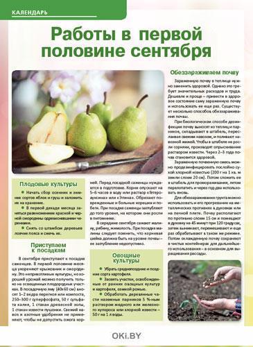 Кабачки плодоносят до заморозков 16 / 2019 Сад, огород- кормилец и лекарь