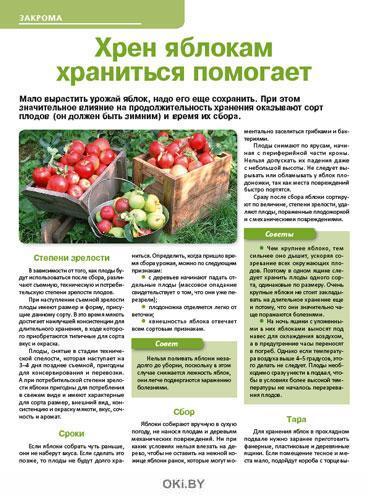 Соорудите арбузу гамак 19 / 2019 Сад, огород- кормилец и лекарь