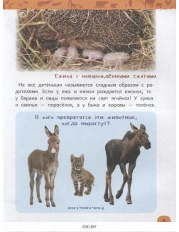 Энциклопедия для детского сада «Детеныши животных»