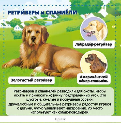 Собаки. Энциклопедия в кармане №3  (19)
