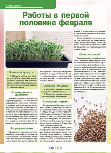 Черри - помидоры со знаком качества 2 / 2020 Сад, огород- кормилец и лекарь