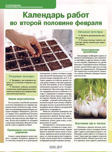 Цветная капуста «ест» за двоих 3 / 2020 Сад, огород- кормилец и лекарь