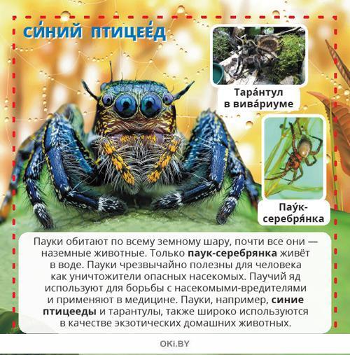 Пауки. Энциклопедия в кармане №4 (20)