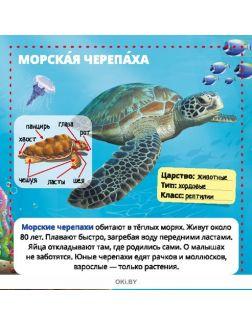 Морские животные. Энциклопедия в кармане №3 (20)
