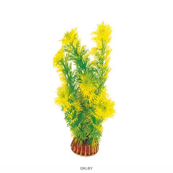 Растение 1998