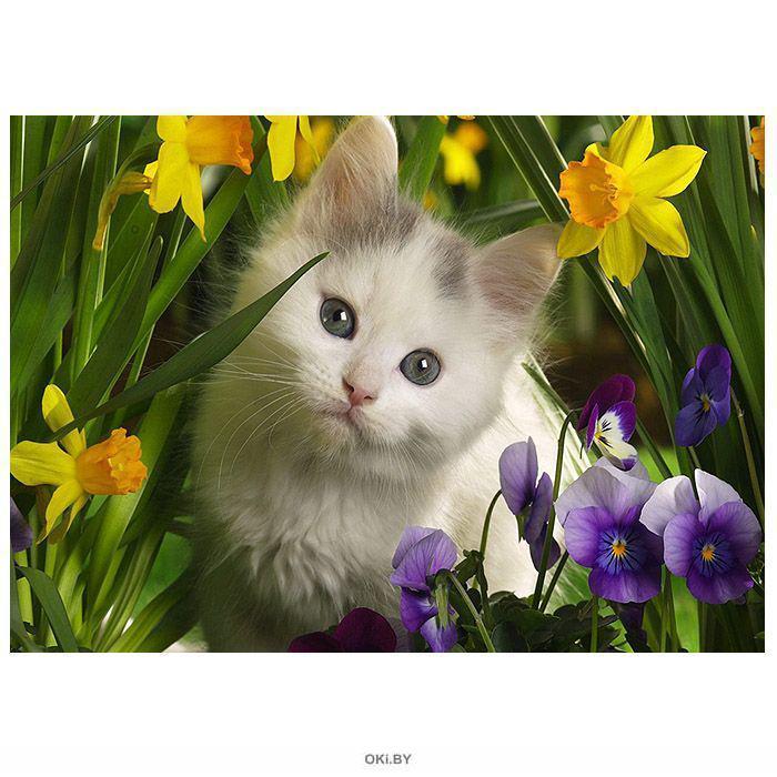Котёнок в цветах - алмазная живопись 30х4 0см Darvish