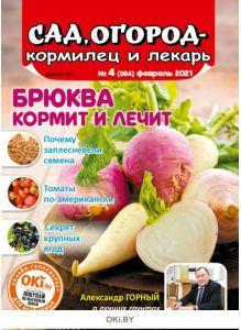 Брюква кормит и лечит 4 / 2021 Сад, огород — кормилец и лекарь
