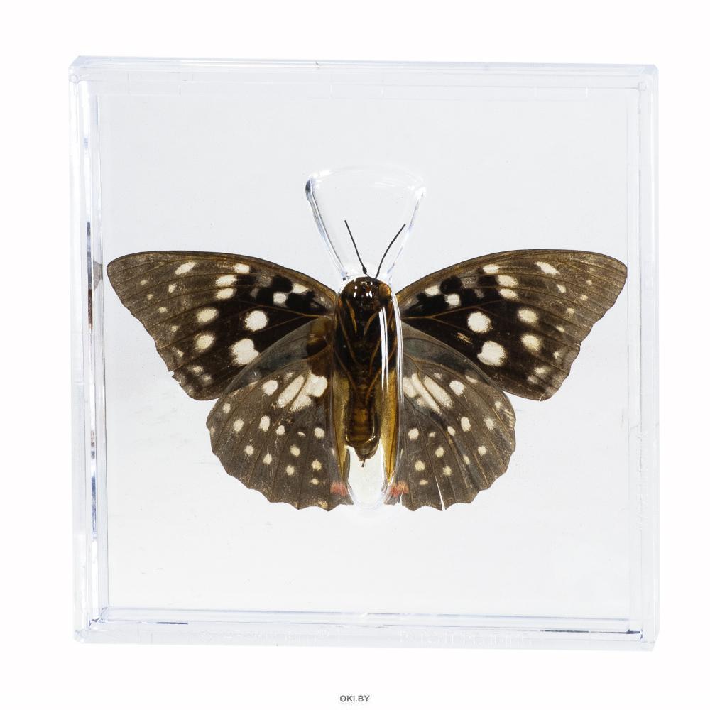 Удивительные бабочки № 2-3 комплект
