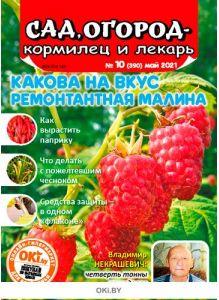 Какова на вкус ремонтантная малина 10 / 2021 Сад, огород — кормилец и лекарь