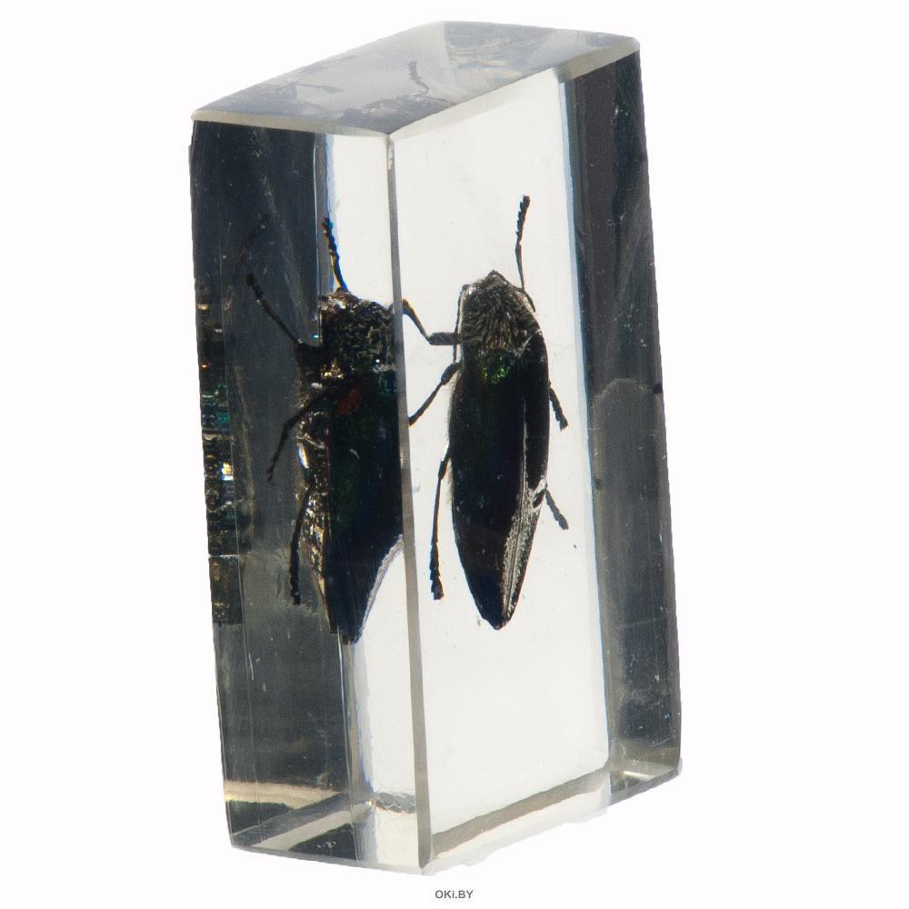 Настоящие насекомые № 28 (21)
