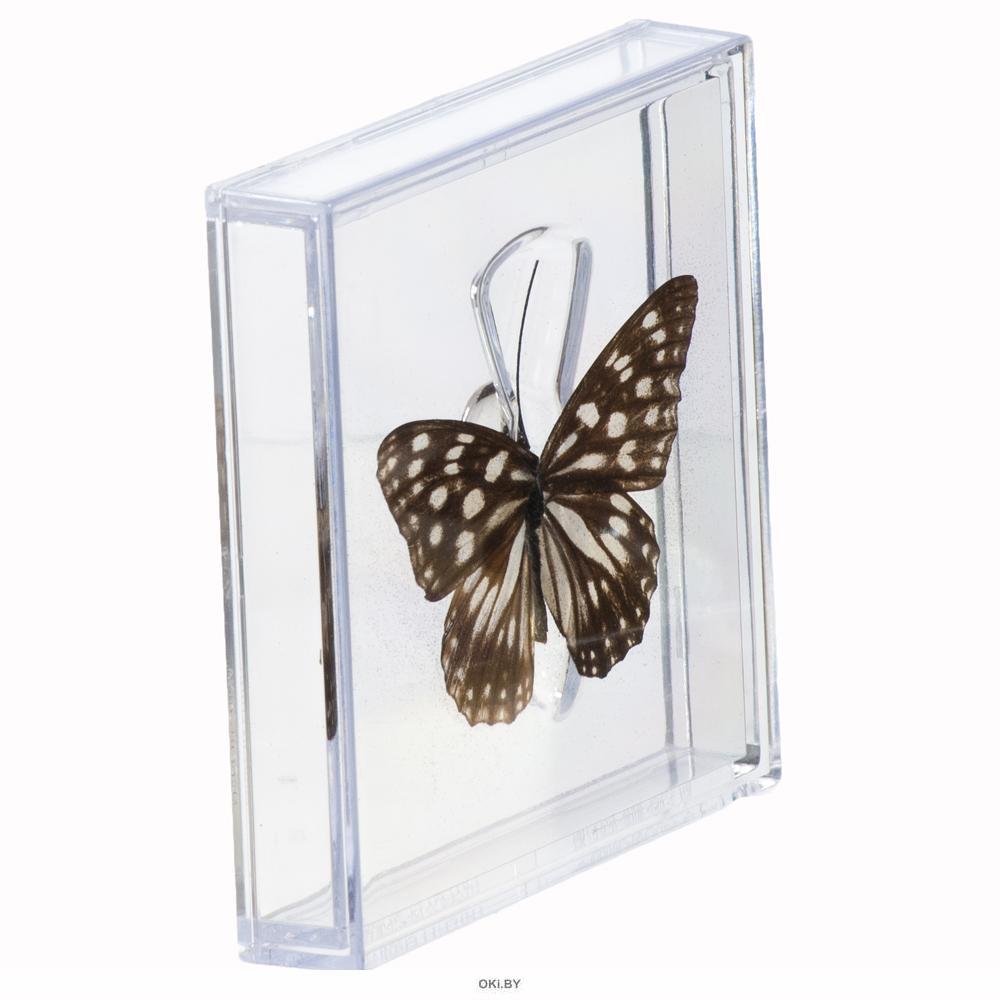 Удивительные бабочки № 6. Гестина Персимилис
