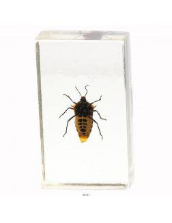 Настоящие насекомые № 27 (21)