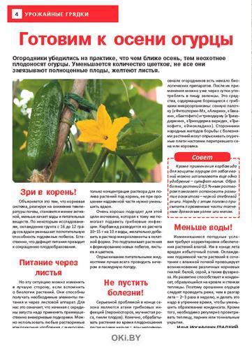 Готовим к осени огурцы 16 / 2021 Сад, огород — кормилец и лекарь