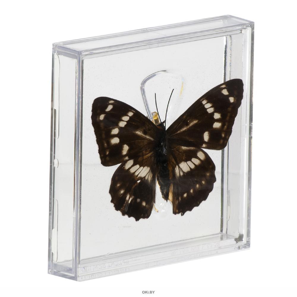 Удивительные бабочки № 12. Переливница ильмовая