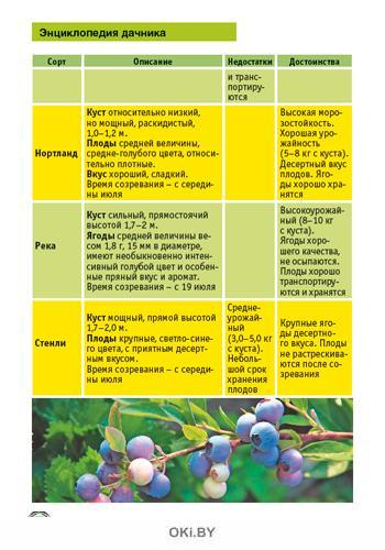 Голубика и другие ягодные кустарники 9 / 2021 Спецвыпуск «Сад огород - кормилец и лекарь»