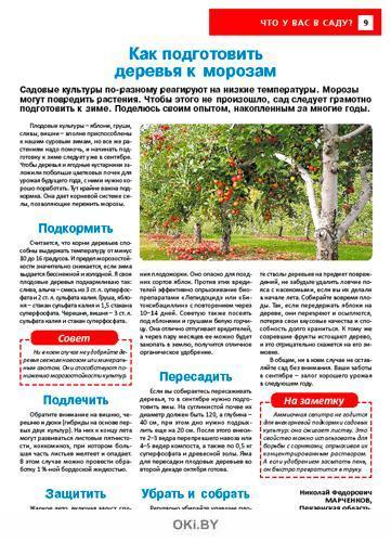 Посеешь рожь — больше картошки соберешь 17 / 2021 Сад, огород — кормилец и лекарь