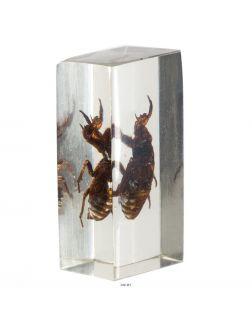 Настоящие насекомые № 41 (21)
