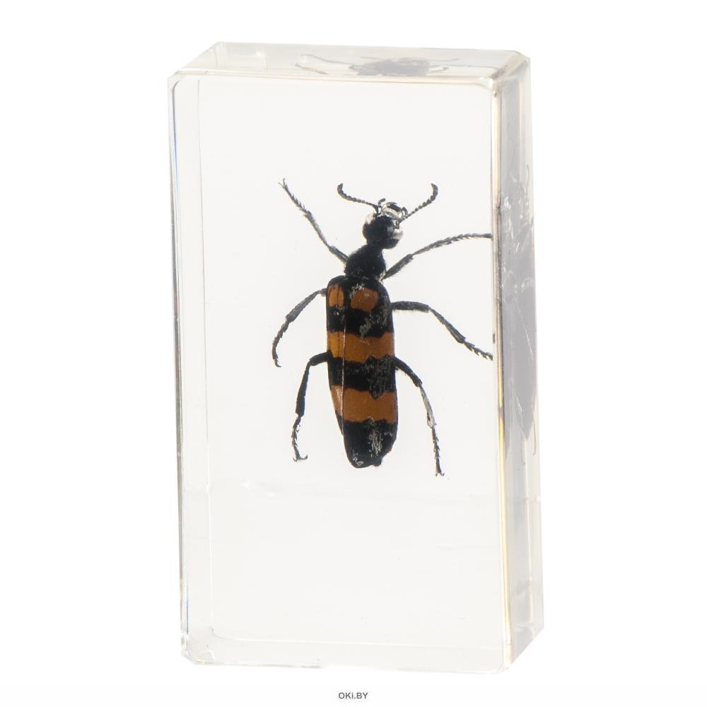 Настоящие насекомые № 42 (21)