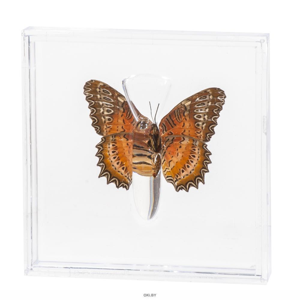 Удивительные бабочки № 13. Цетозия билис