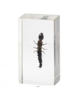 Настоящие насекомые № 48 (21)