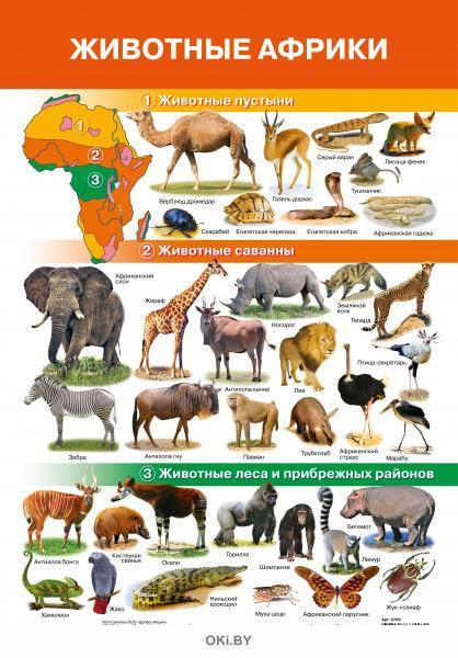 Плакат. Животные Африки