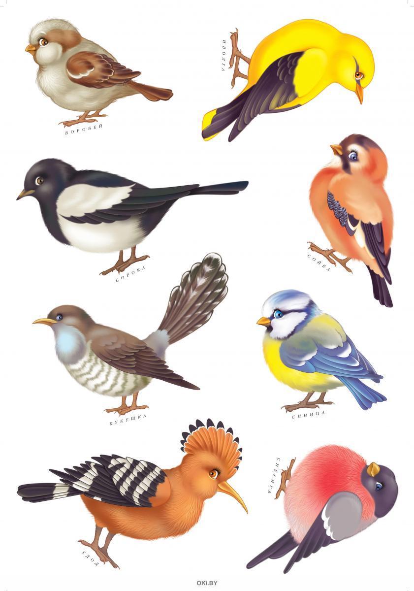 ДСМ. Птицы