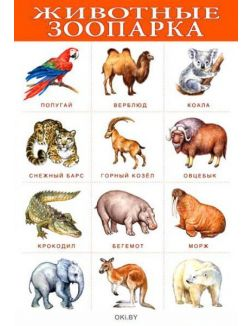 Плакат. Животные зоопарка