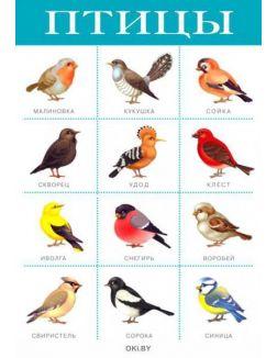 Плакат. Птицы