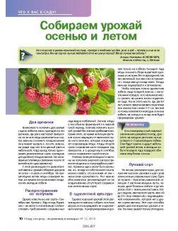Может ли редиска храниться до зимы 12 / 2018 Сад, огород- кормилец и лекарь